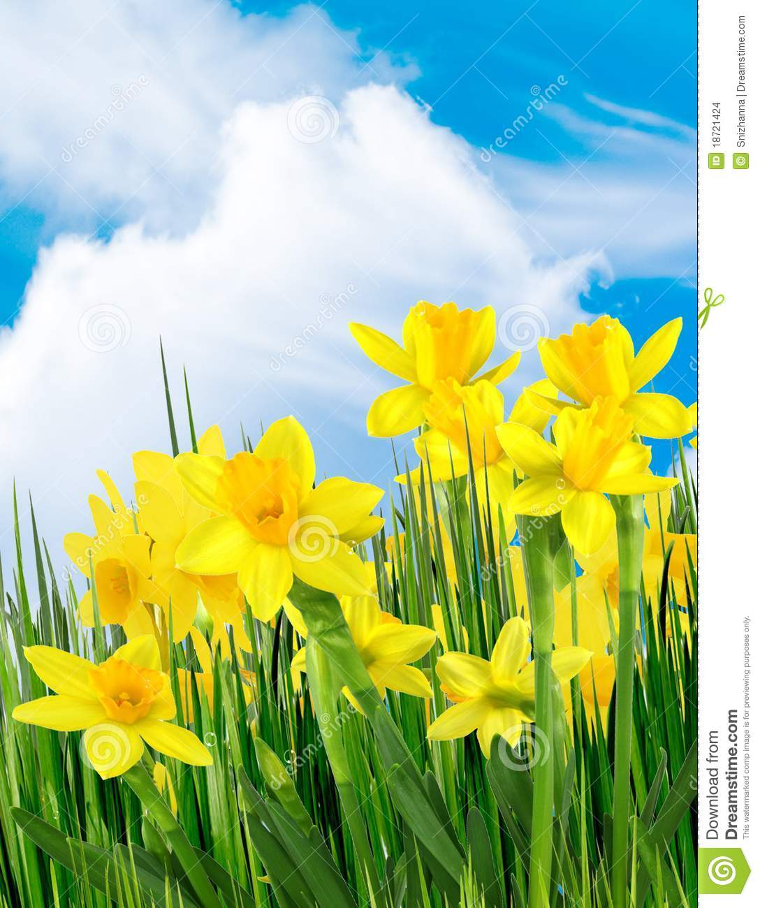 Spring yellow flowers stock photo. Image of cloud, outdoor ...