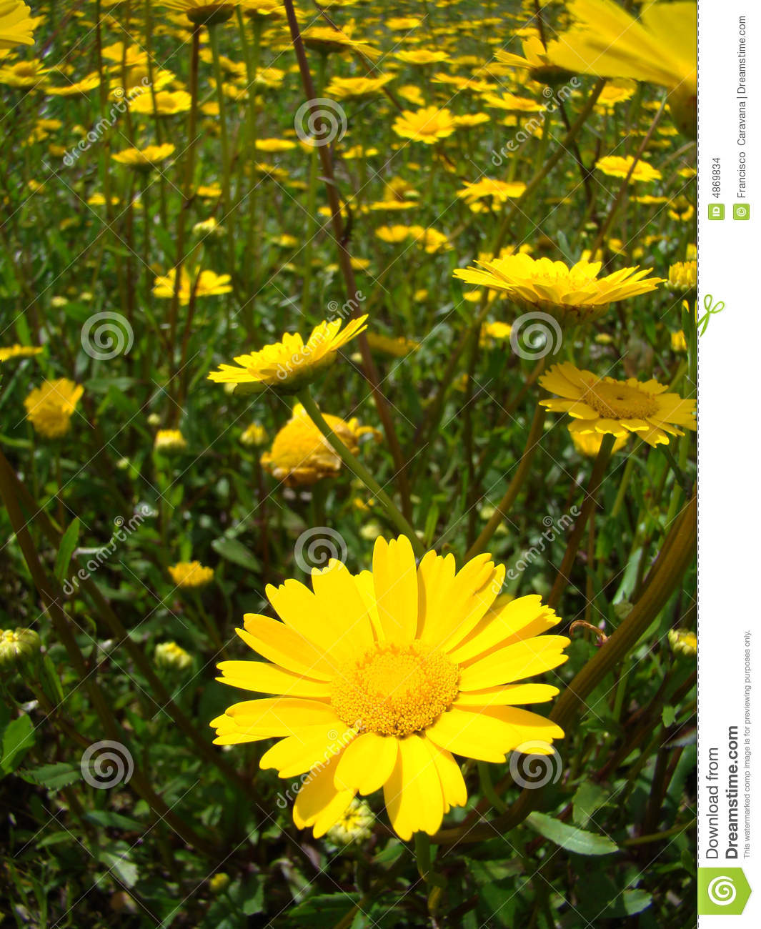 Yellow Flowers Names And Pictures Flower Names By Color Bright