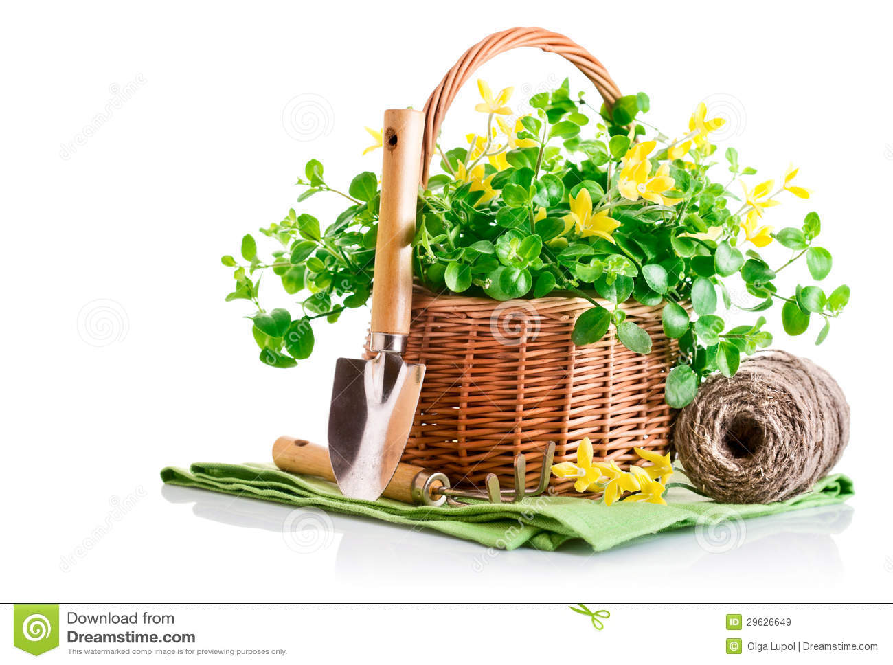 Spring Yellow Flowers In Basket With Garden Tools Royalty