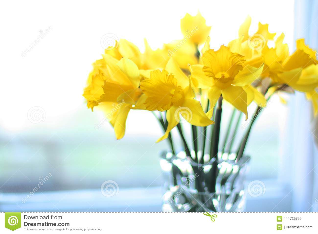 Spring yellow flowers daffodils sunny romantic present stock image download spring yellow flowers daffodils sunny romantic present stock image image of flowers present mightylinksfo