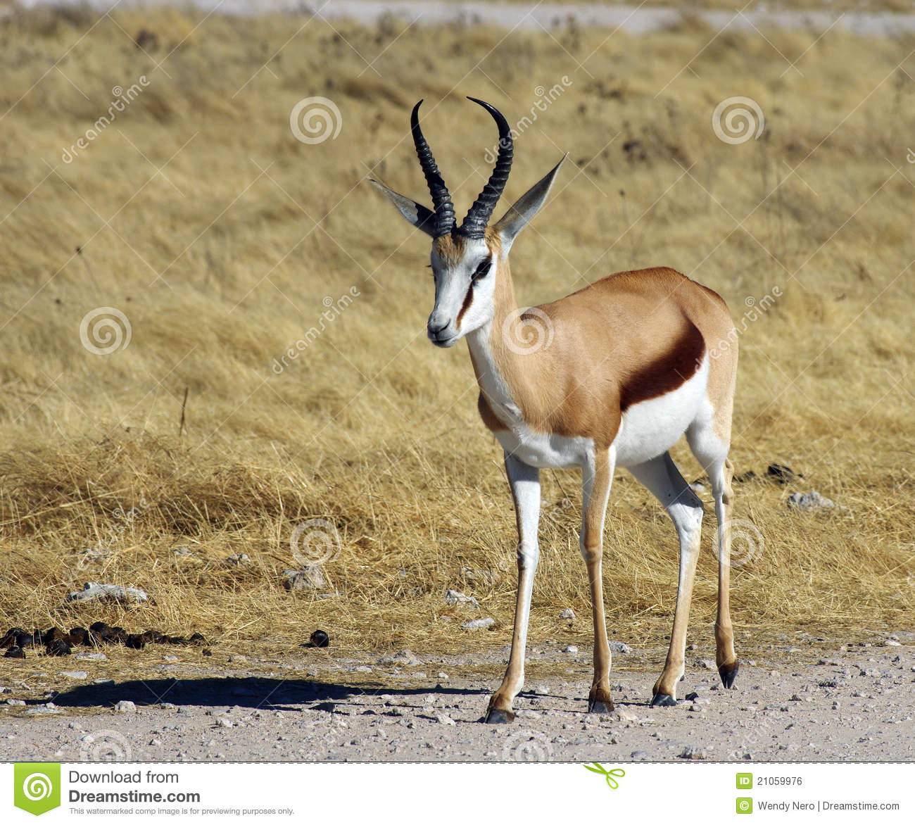 clipart springbok - photo #32