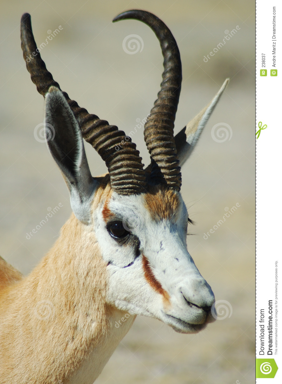 clipart springbok - photo #30
