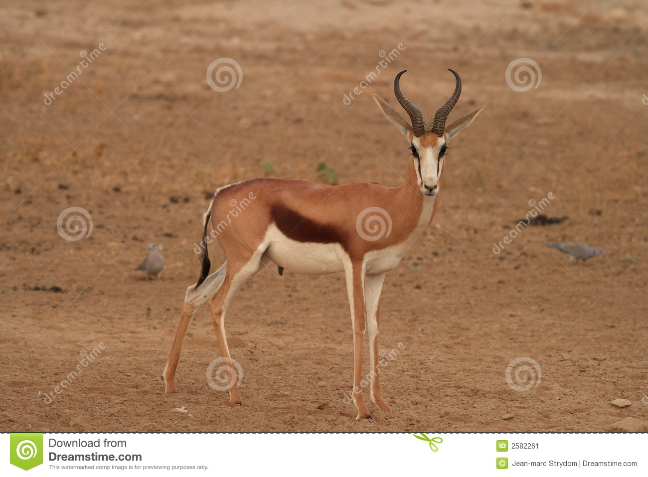 clipart springbok - photo #50