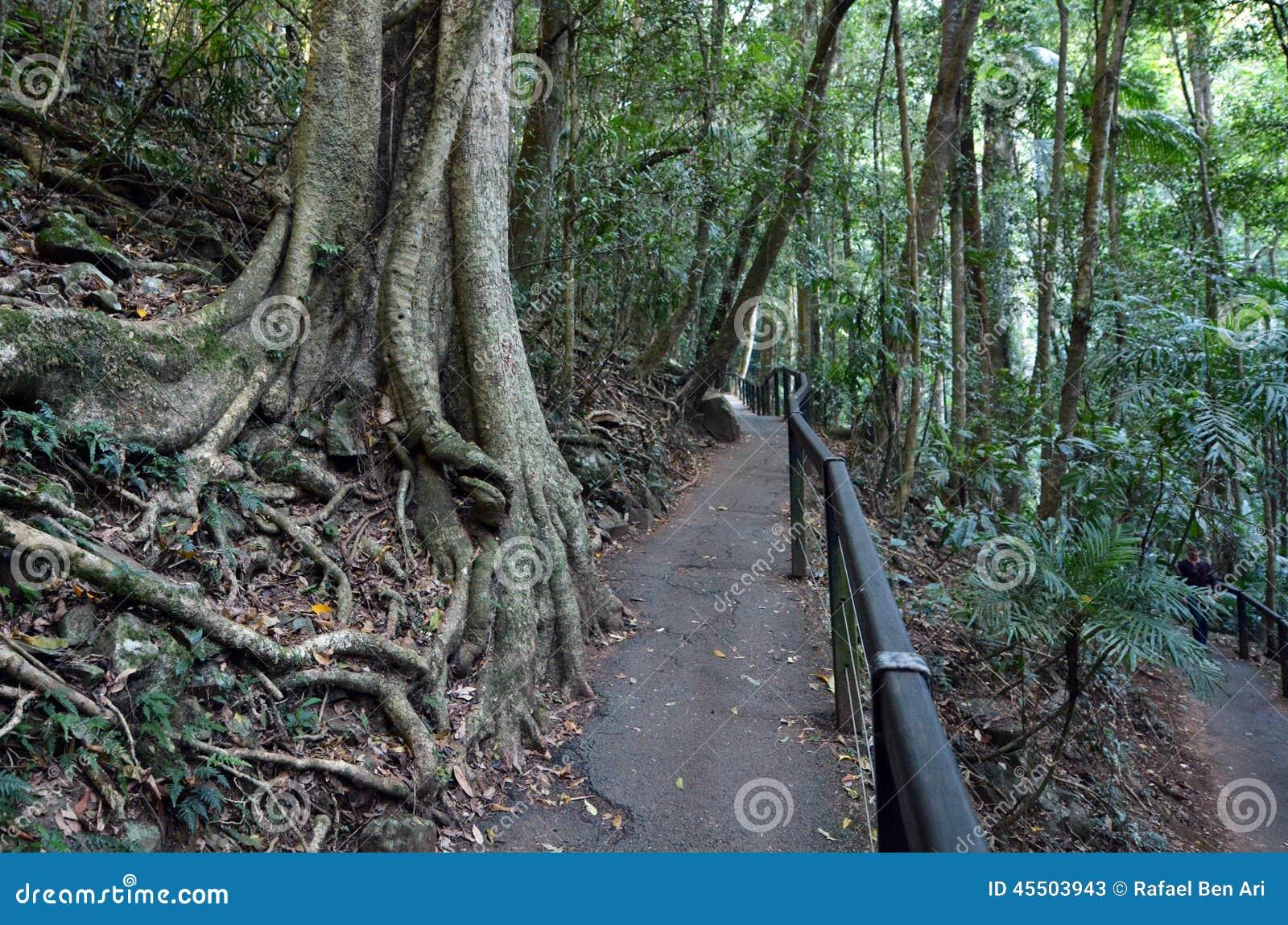 Springbrook nationalpark - Queensland Australien