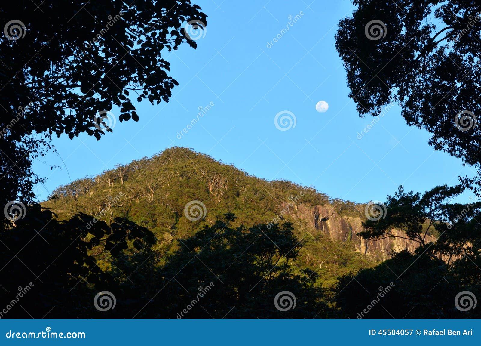 Springbrook park narodowy - Queensland Australia