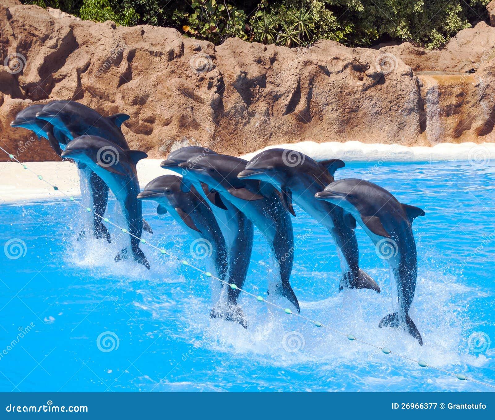 Springen mit acht Delphinen