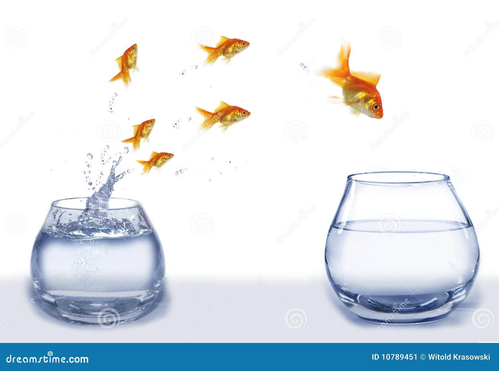 Springen sie goldfische von aquarium zu aquarium stockbild for Aquarium goldfische