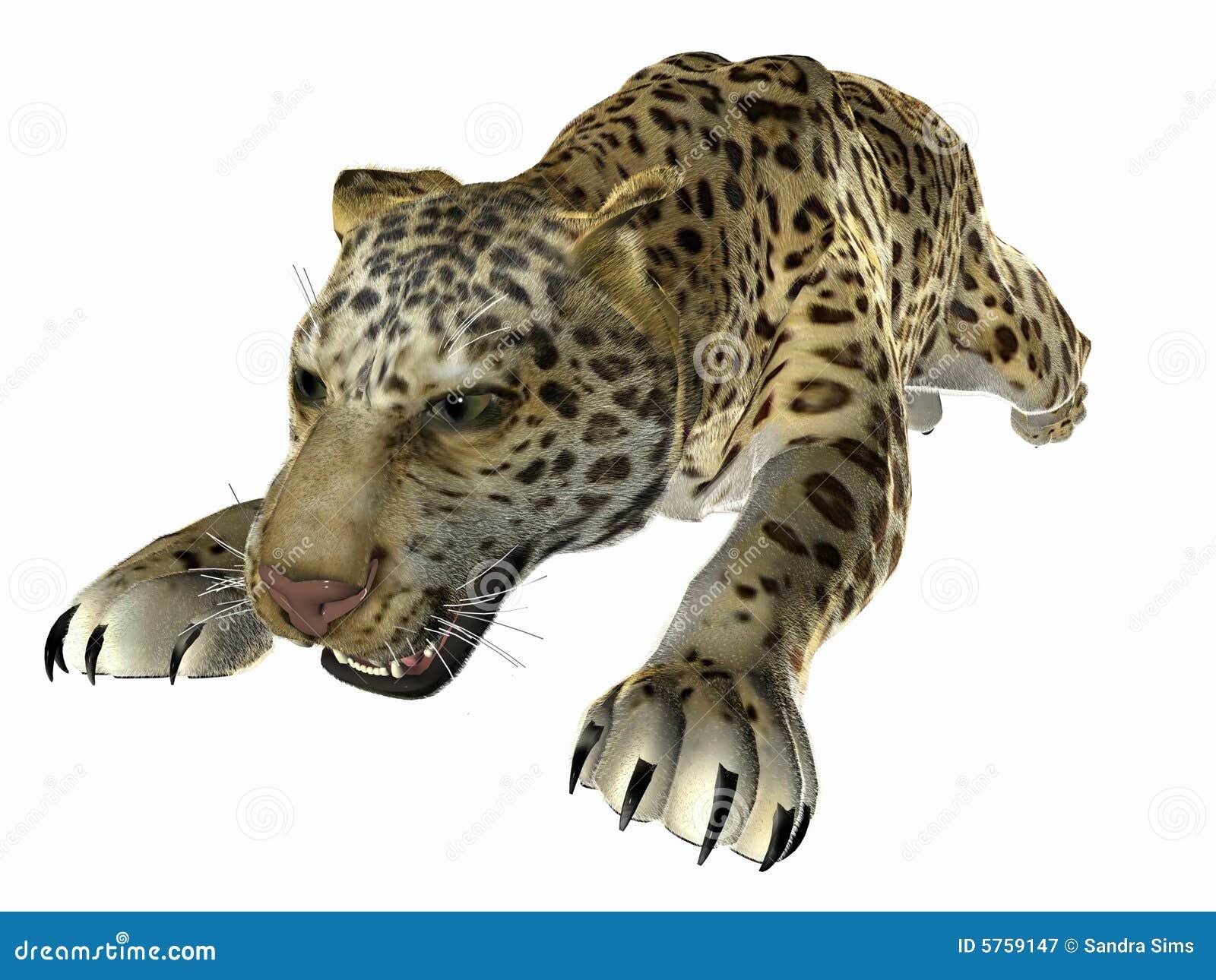 Springende Jaguar