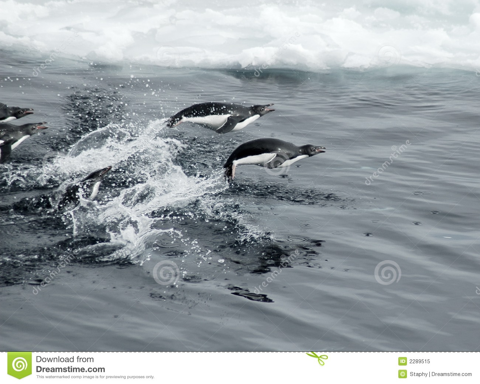 Springende pinguïnen