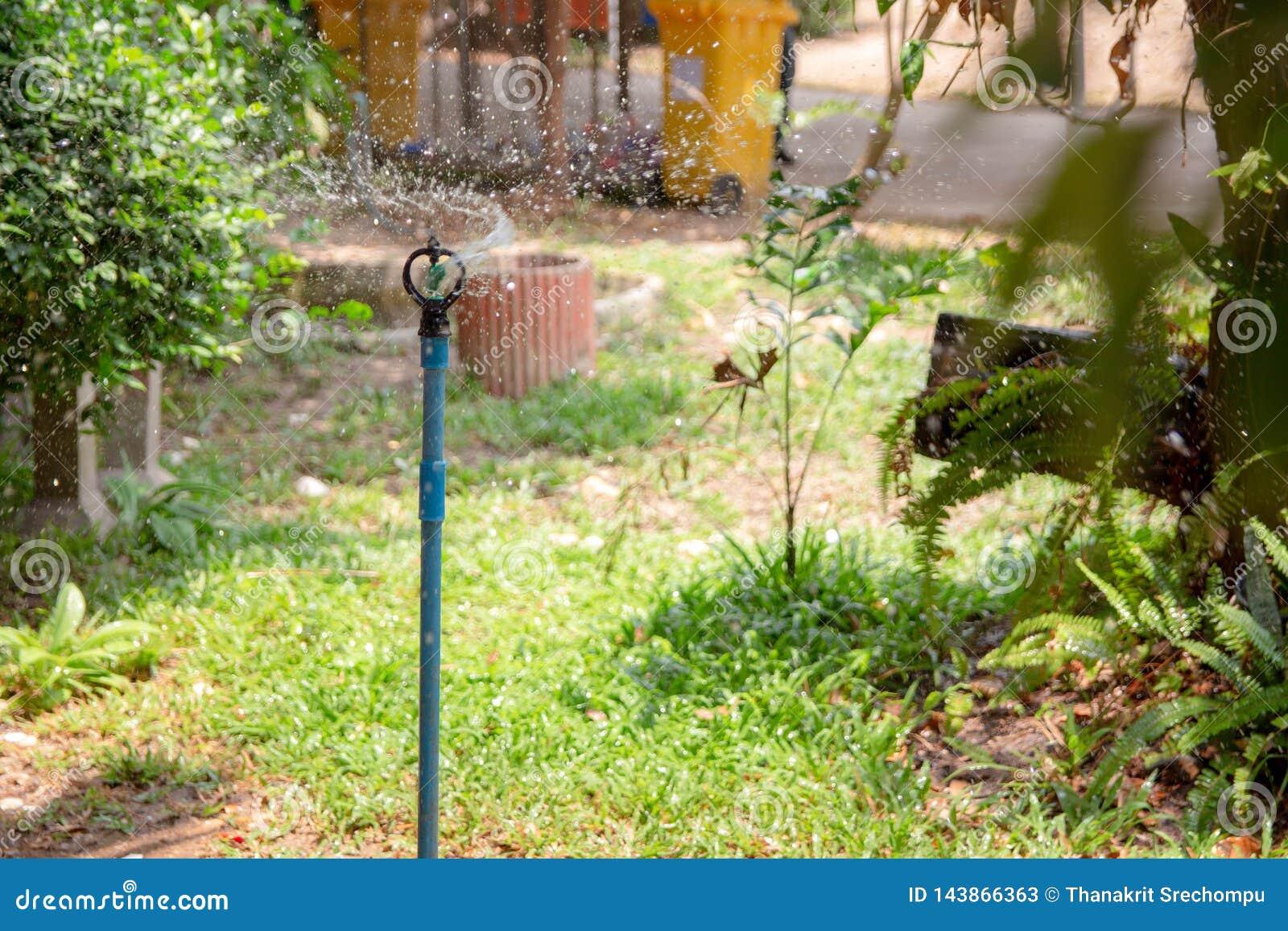 Springer nawadnia rośliny