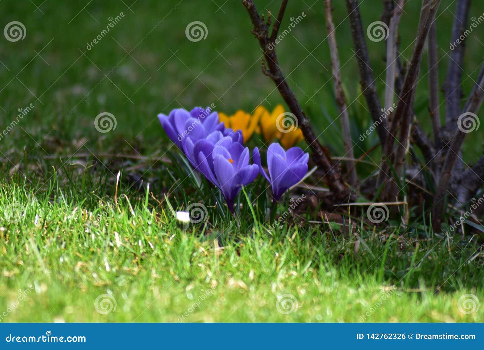 Springflowers en el prado en primavera