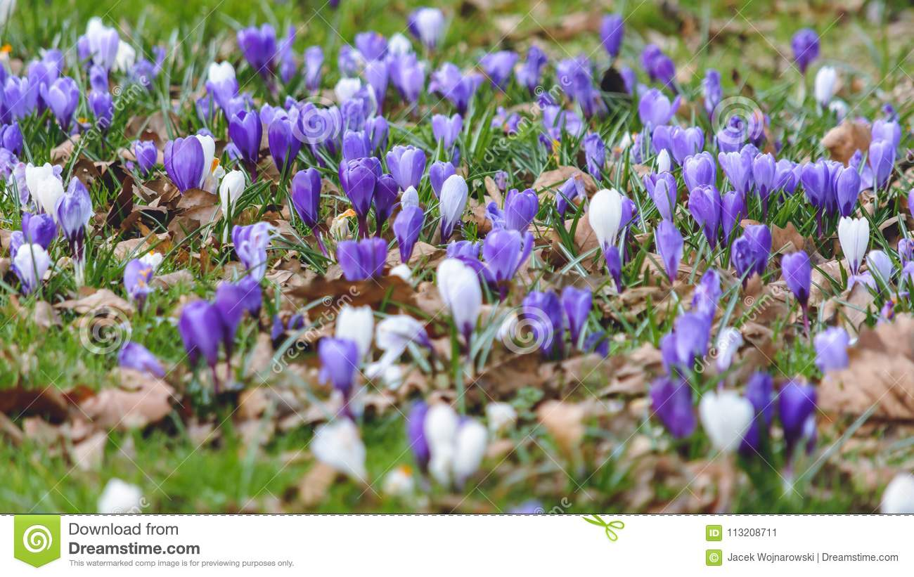 Springs Flowers B Stock Image Image Of Flower Spring 113208711