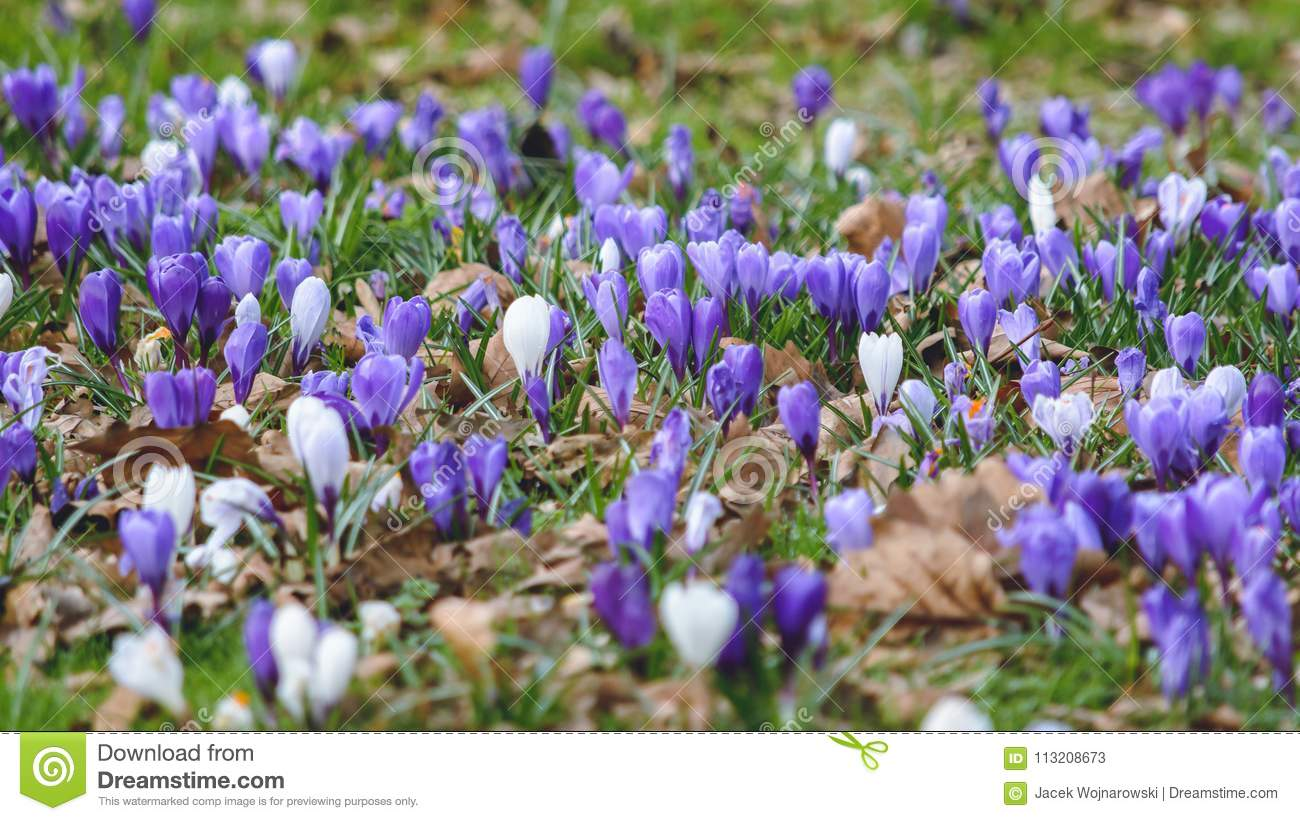 Springs Flowers C Stock Image Image Of Depth Focus 113208673