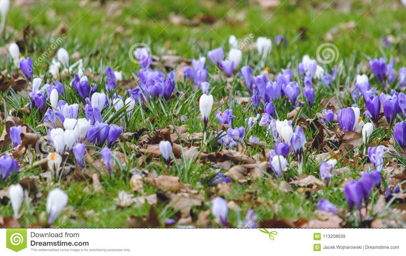 Springs Flowers A Stock Image Image Of Selective Nature 113208639