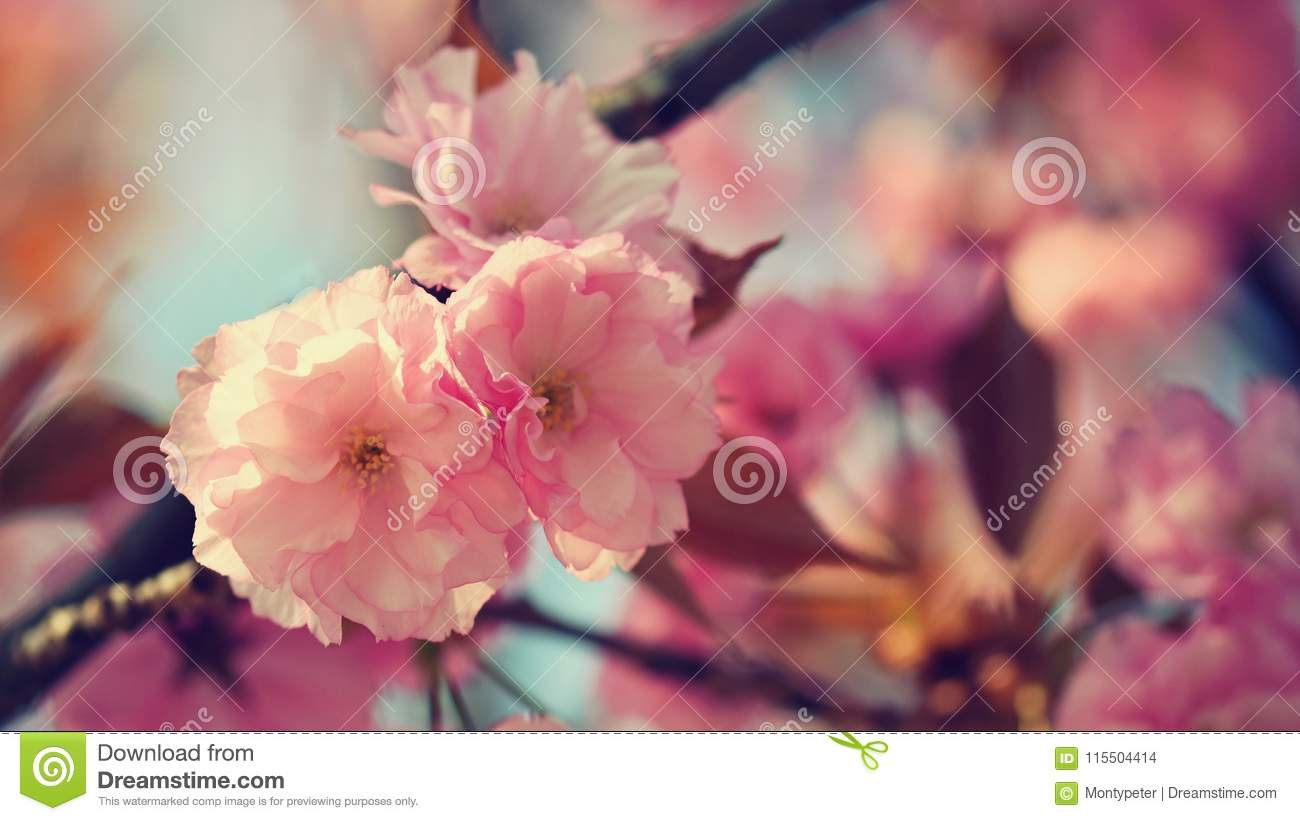 Springtime. Beautiful floral spring abstract background of nature. Blooming branches of trees for spring greeting cards with copy