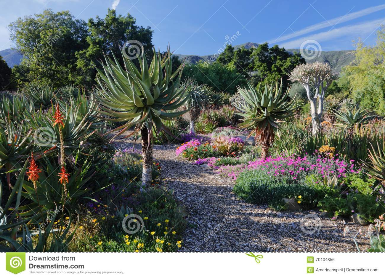 Download Springtime Bloom In California At Taft Botanical Gardens, Ojai C  Editorial Photo   Image