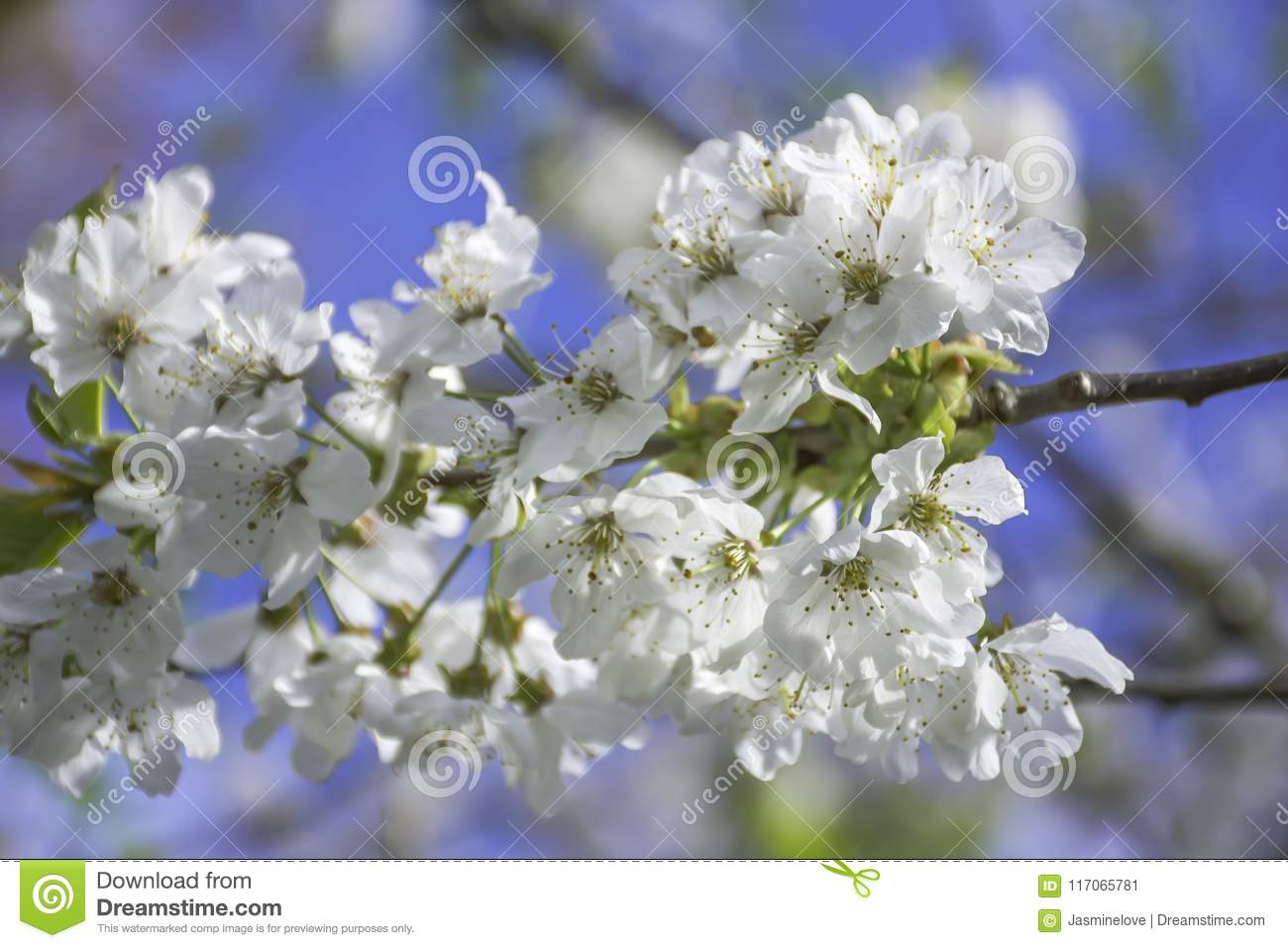 Springtime Blossom On Uk Meadow Stock Image Image Of Nature