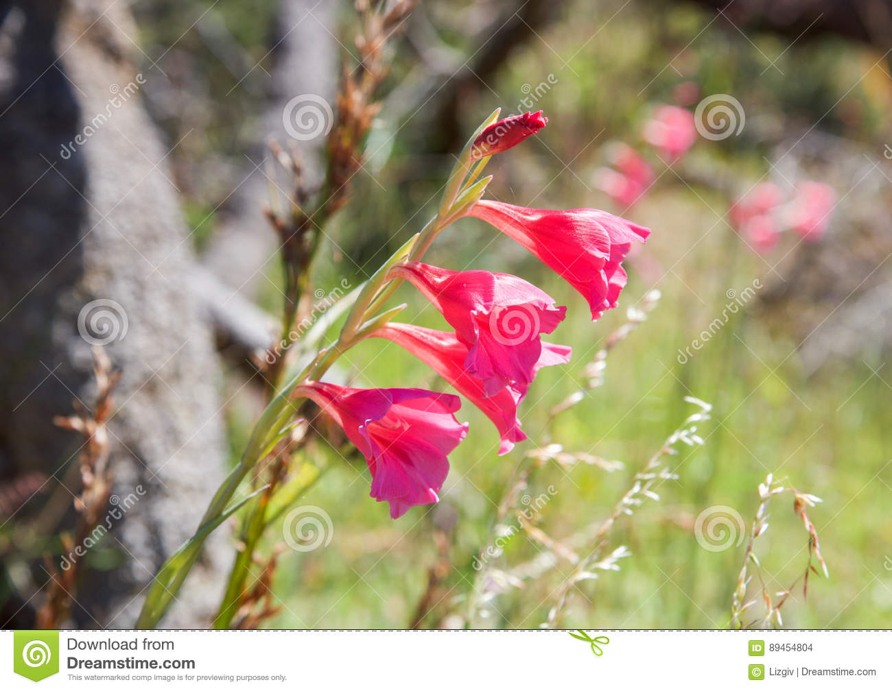 Springtime Flowers Stock Photo Image Of Native Bright 89454804