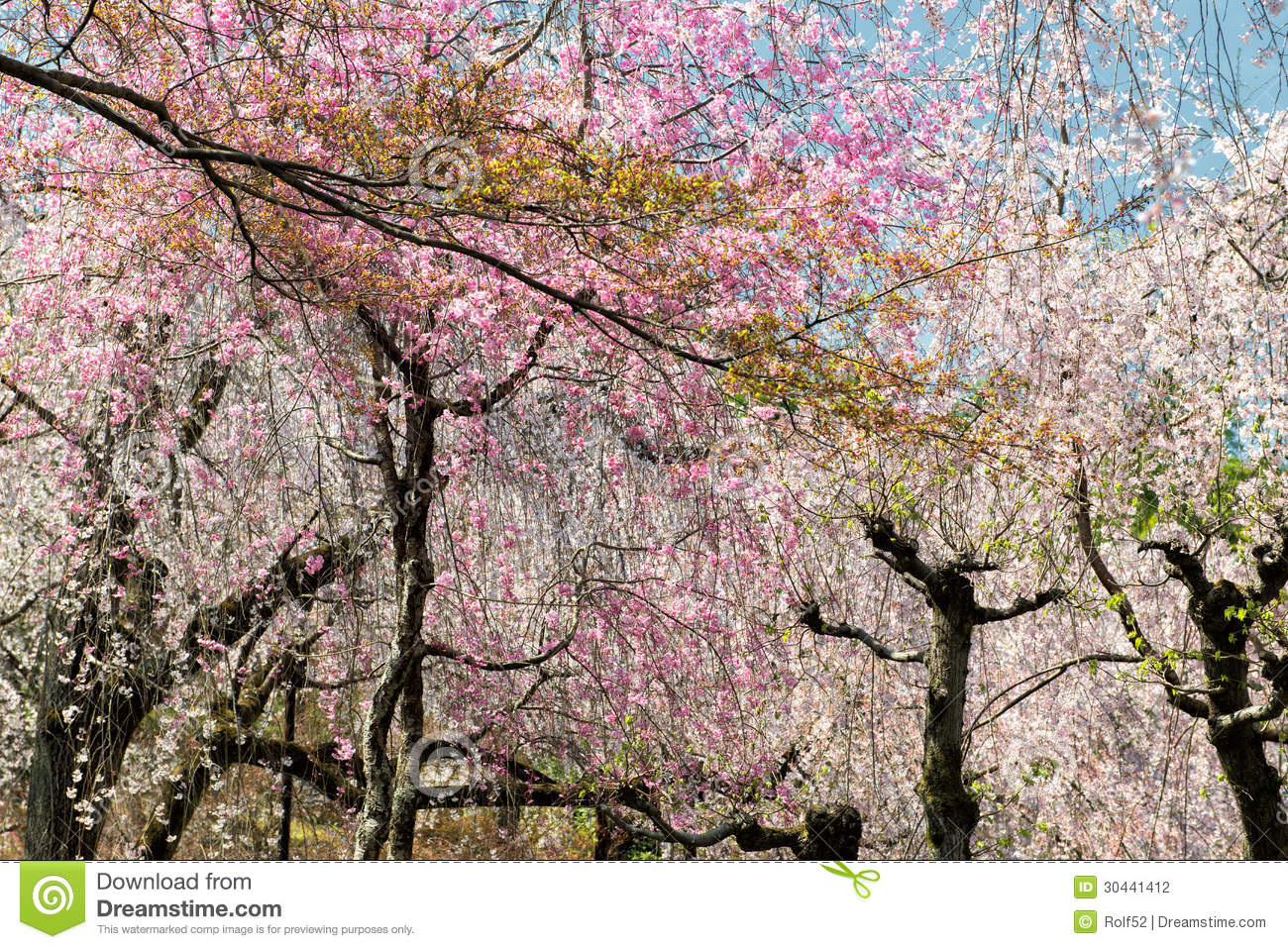 how to say springtime in japanese