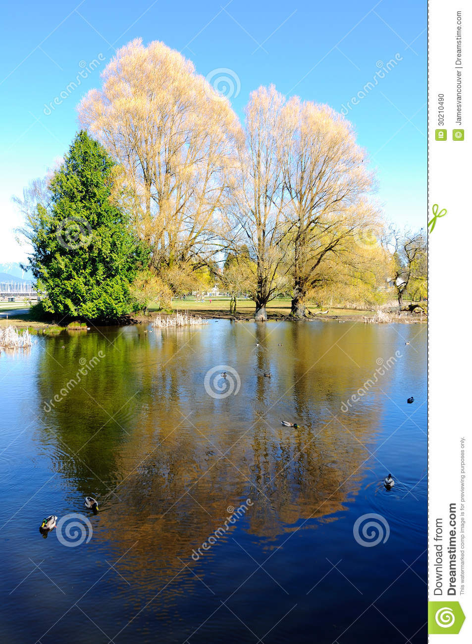 Springtime pond and taconic hills stock photography for Pond dealers