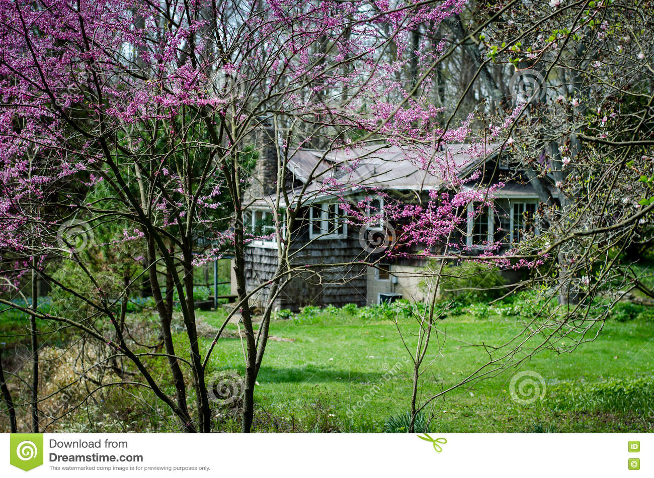 Springtime Redbuds And Summer House Stock Image - Image of garden ...