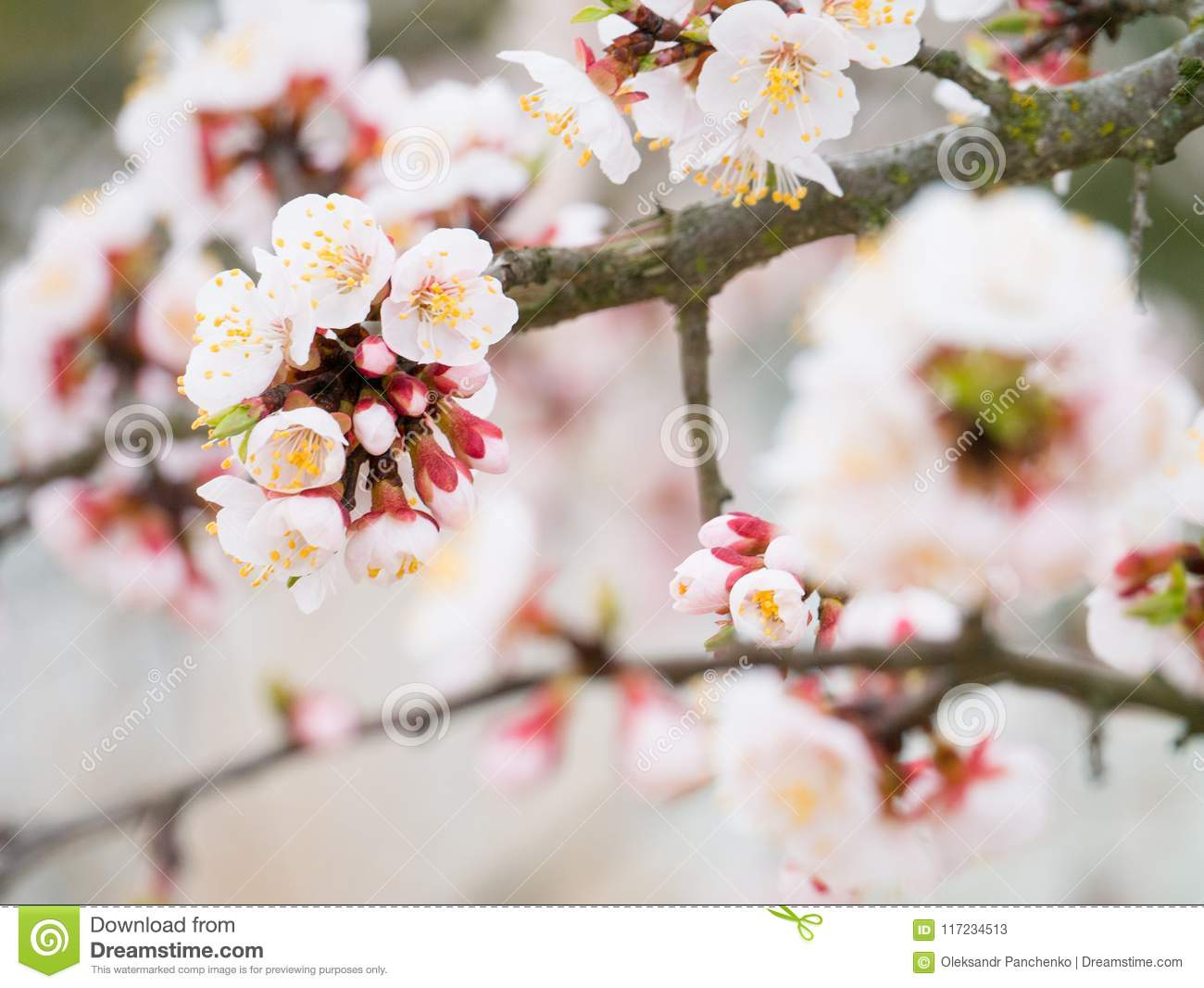 Springtime Spring Flowers Bloom Background A Beautiful Nature
