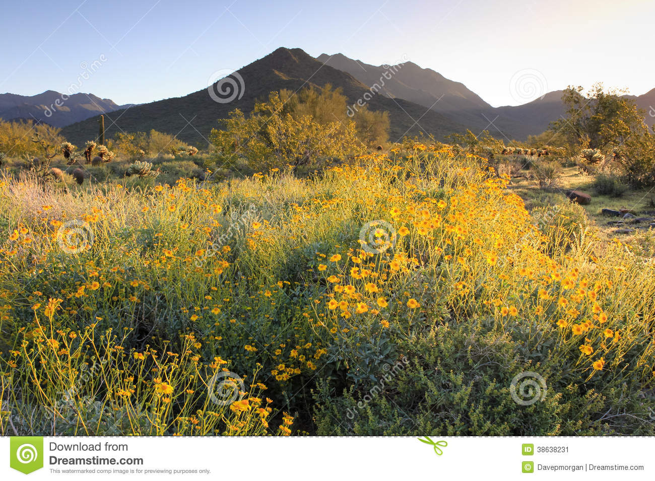phoenix mountain preserve map with Stock Image Springtime Sunrise Sonoran Desert Lights Mountains Cacti Blooming Wildflowers Mcdowell Preserve Scottsdale Arizona Image38638231 on 5751515 besides Azsedona in addition Stock Image Springtime Sunrise Sonoran Desert Lights Mountains Cacti Blooming Wildflowers Mcdowell Preserve Scottsdale Arizona Image38638231 additionally Decoder furthermore South Mountain Maps Through Time.