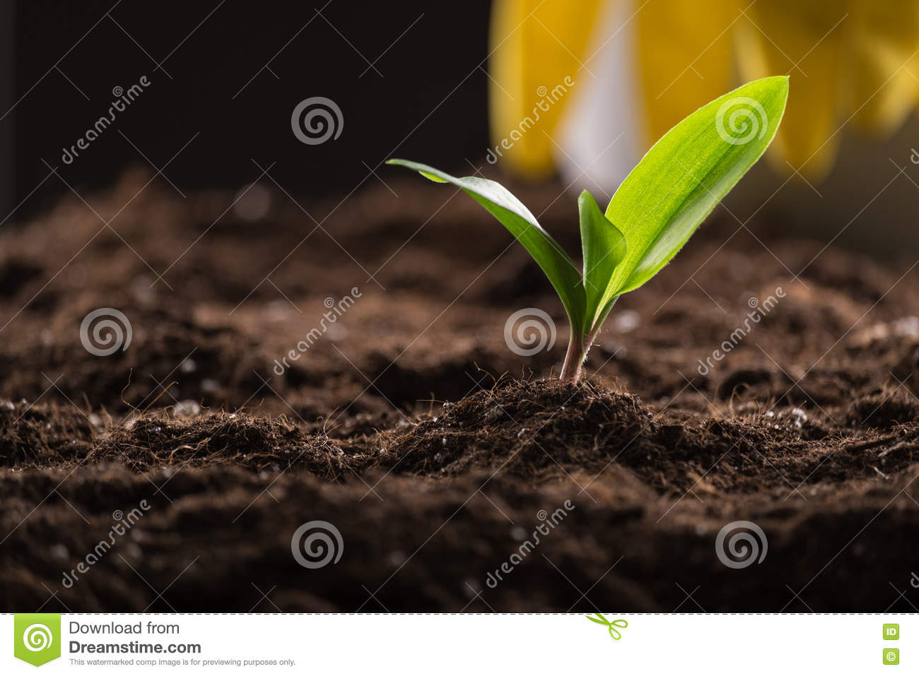 Sprout in ground