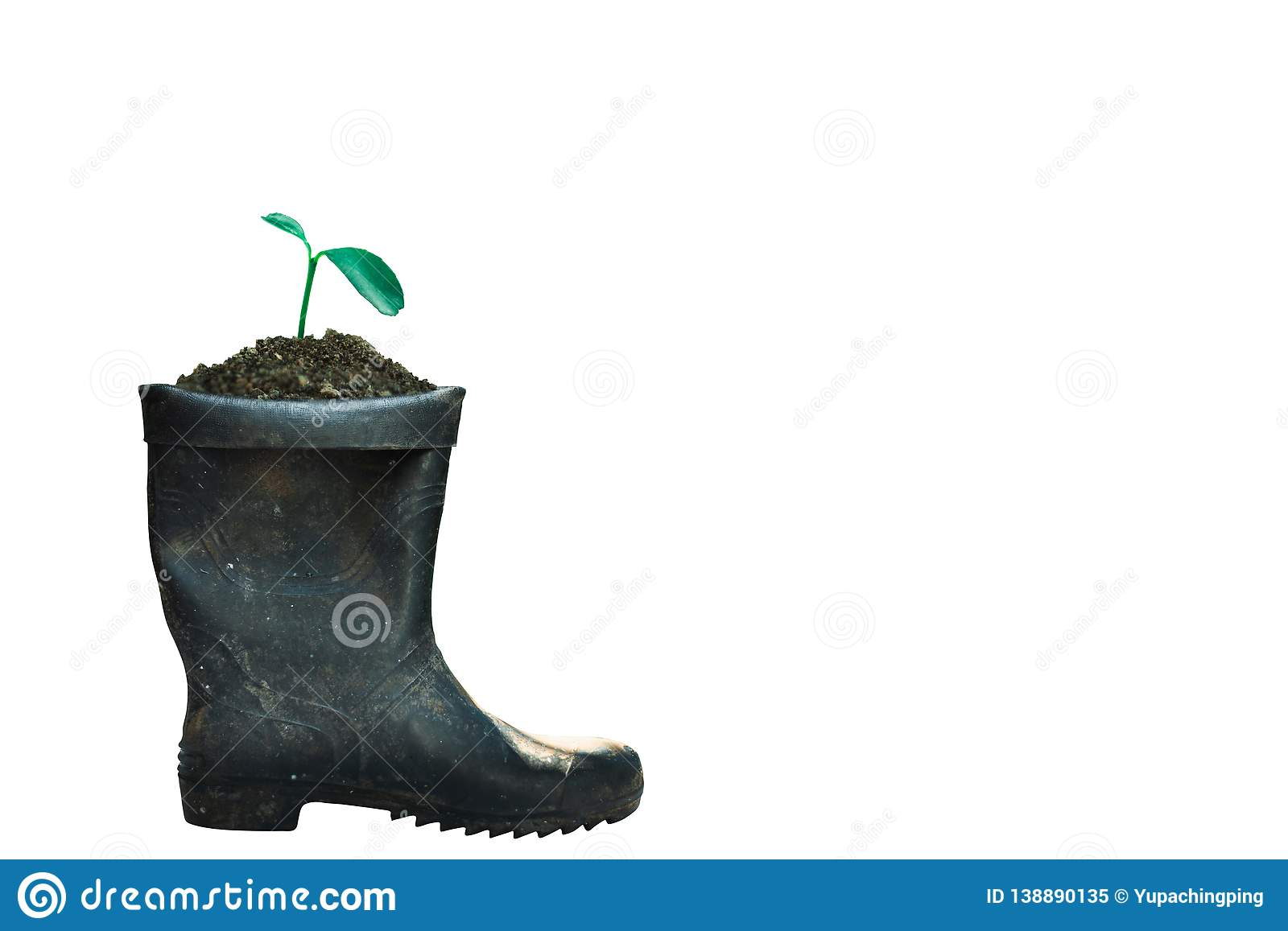 sprout growing in boot