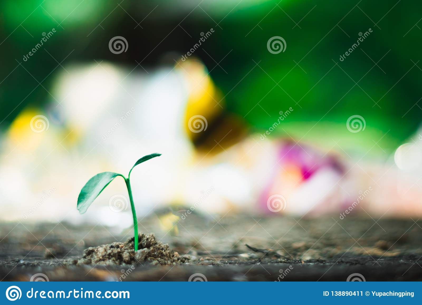 sprout growing on ground