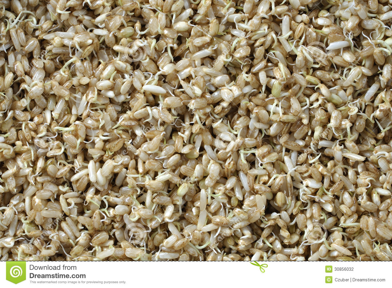 Sprouted rice