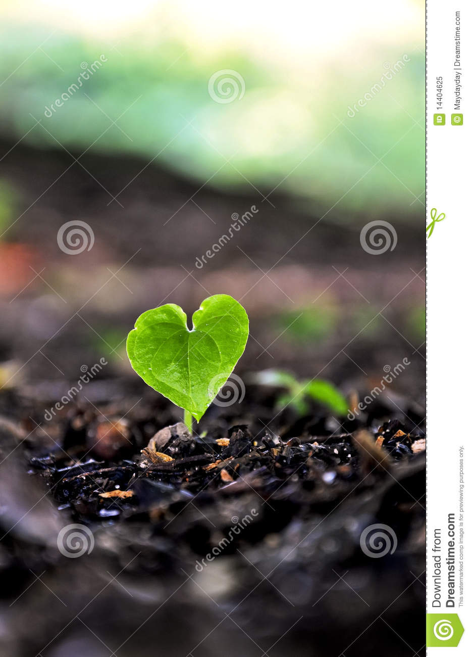 Sprouting Heart