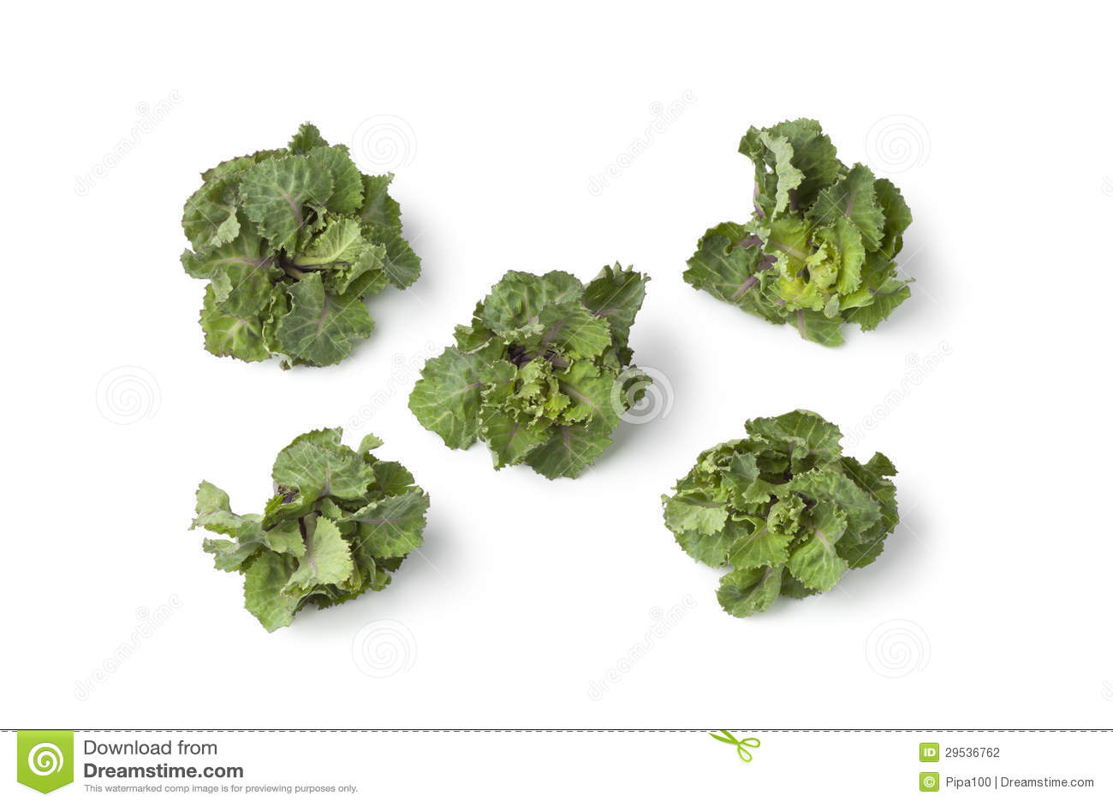 Sprouts verdes frescos da flor