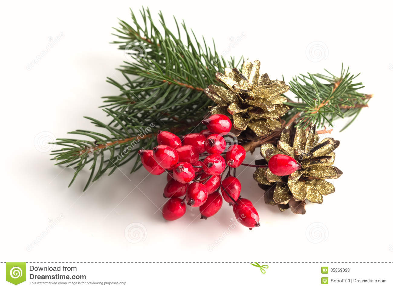 Spruce berries pine cones on white royalty free stock for What to do with pine cones for christmas