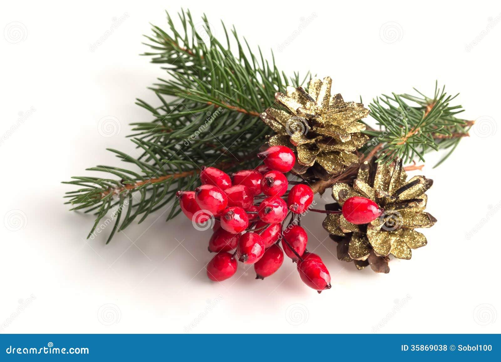 Spruce, Berries, Pine Cones On White Stock Photo