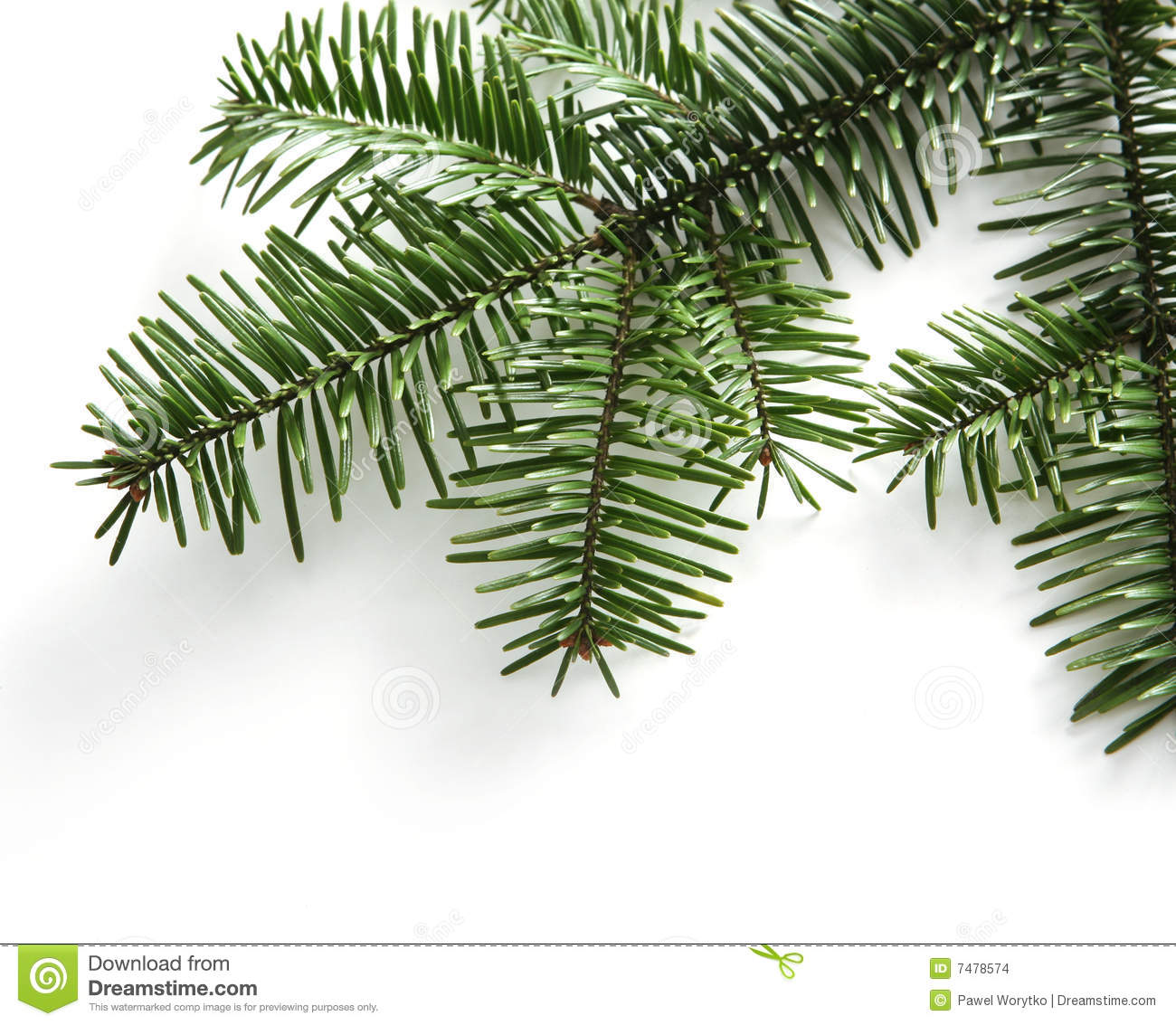 Spruce Branch Isolated On White Background Stock Images Image 7478574