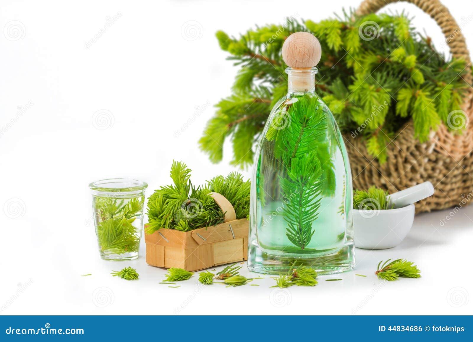 Spruce needle bad, Medicinal plants