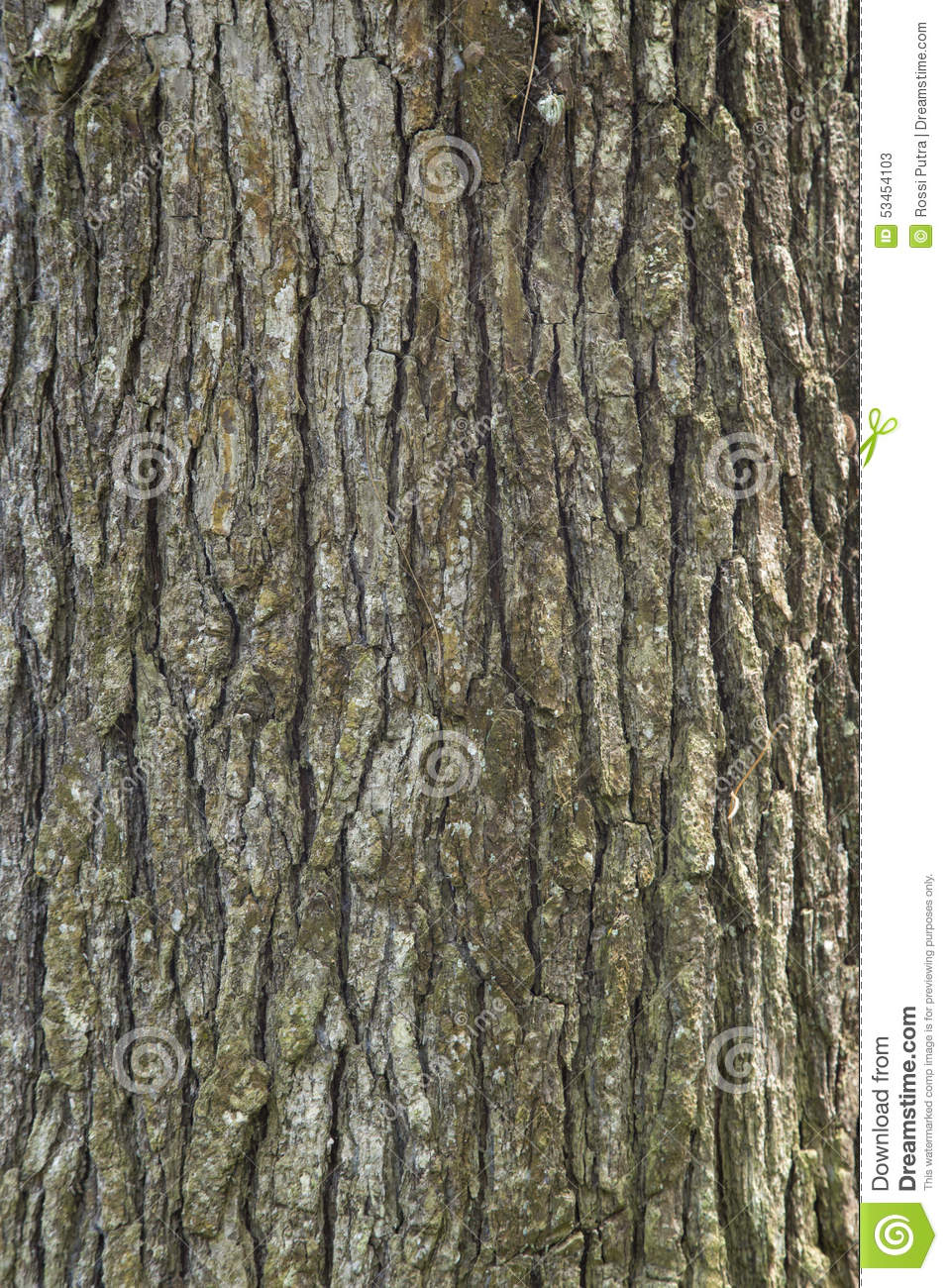 Spruce pine tree wood skin texture stock photo image for Pine tree timber