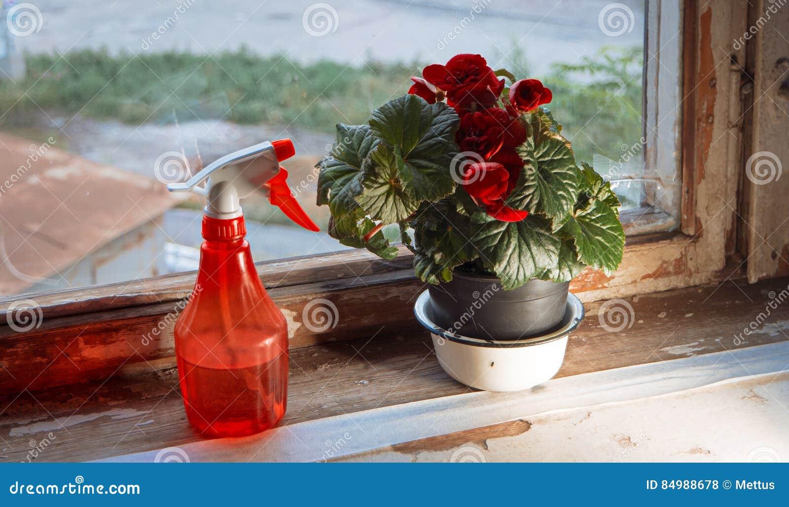 Spruzzatore e pianta da appartamento dell 39 acqua rossa in for Grandi planimetrie dell appartamento