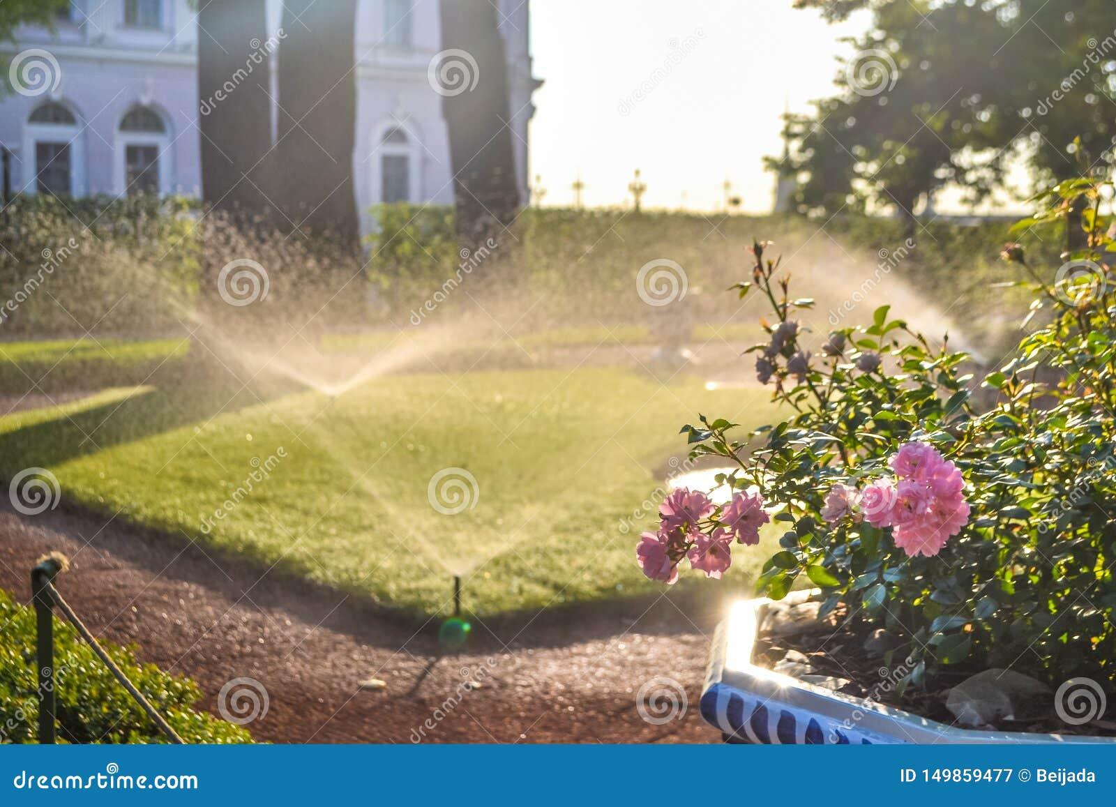Spruzzatori di irrigazione e di giorno soleggiato al giardino di estate, St Petersburg