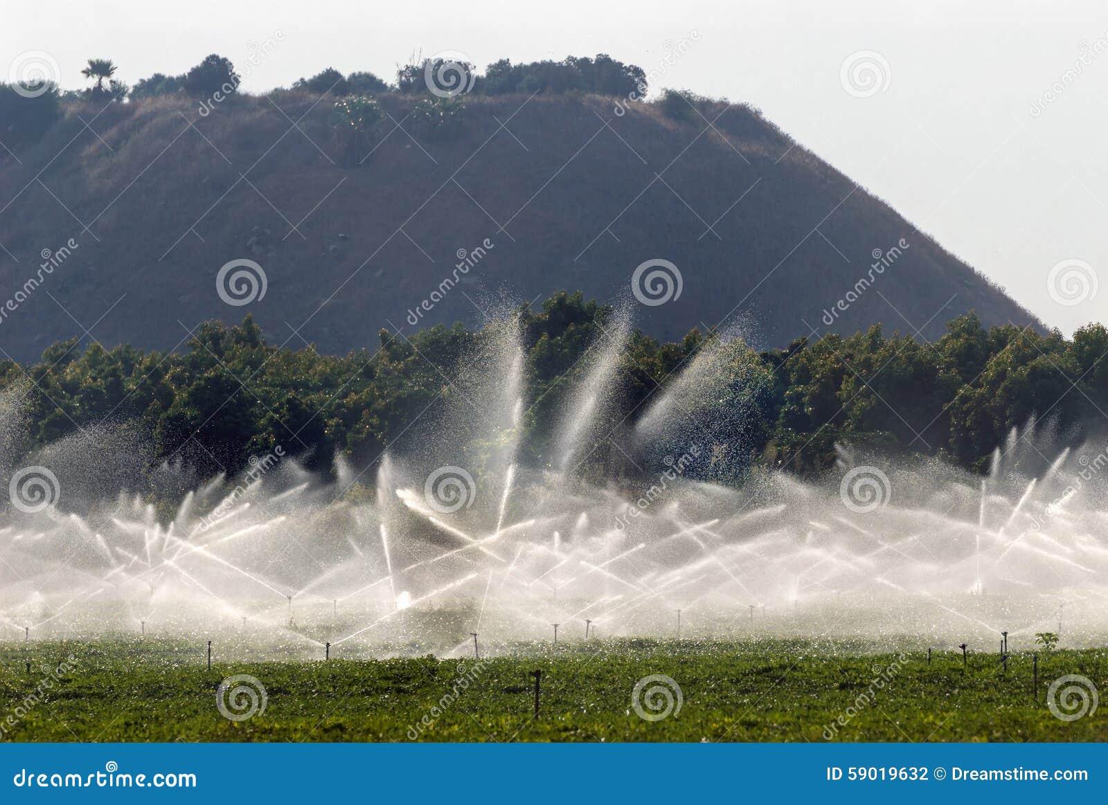 Spruzzatori di irrigazione sul giacimento dell 39 arachide for Spruzzatori giardino