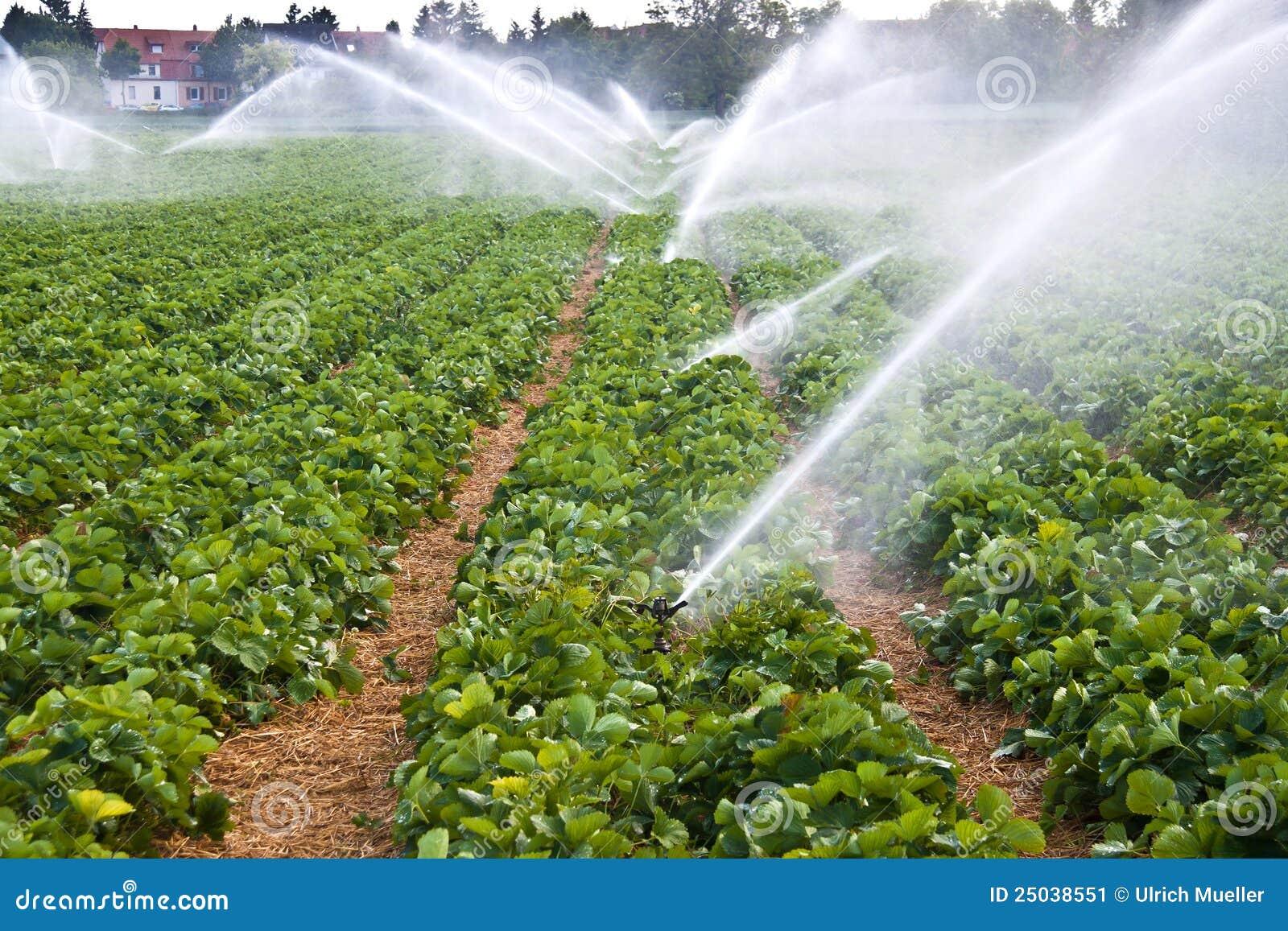 Spruzzo d acqua di agricoltura