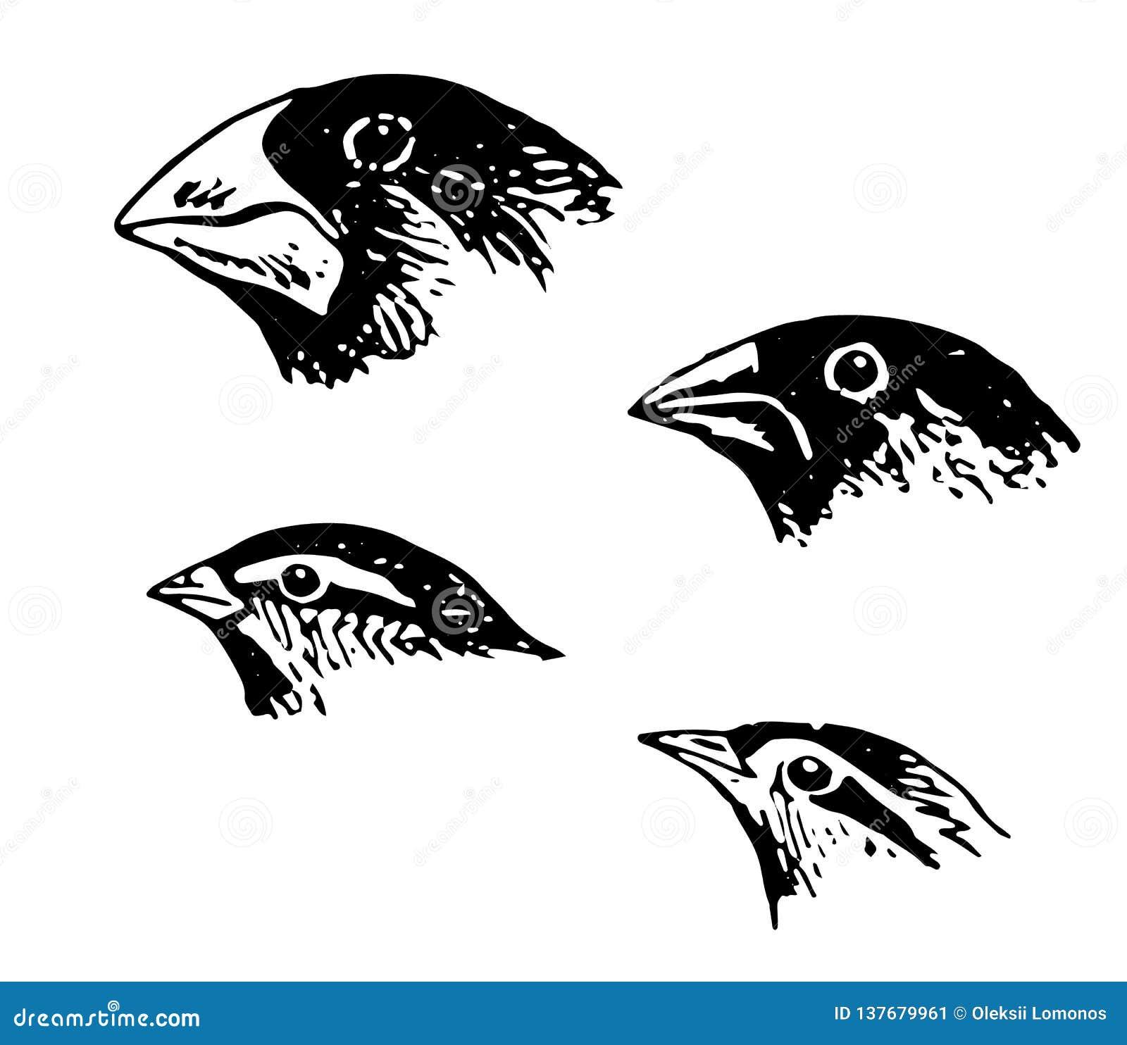 Spule im verschiedenen erstaunlichen Vogel der Winkel sehr