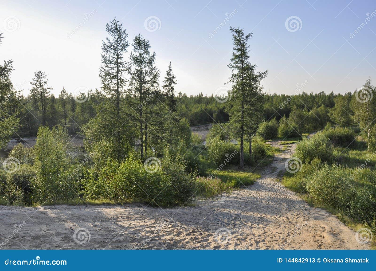 Spur ?ber gr?nem Wald mit Kiefern, Fichten, L?rchen und Birken Weg, Weise, Bahn, Weg Heller Sommertag mit blauem Himmel Tr