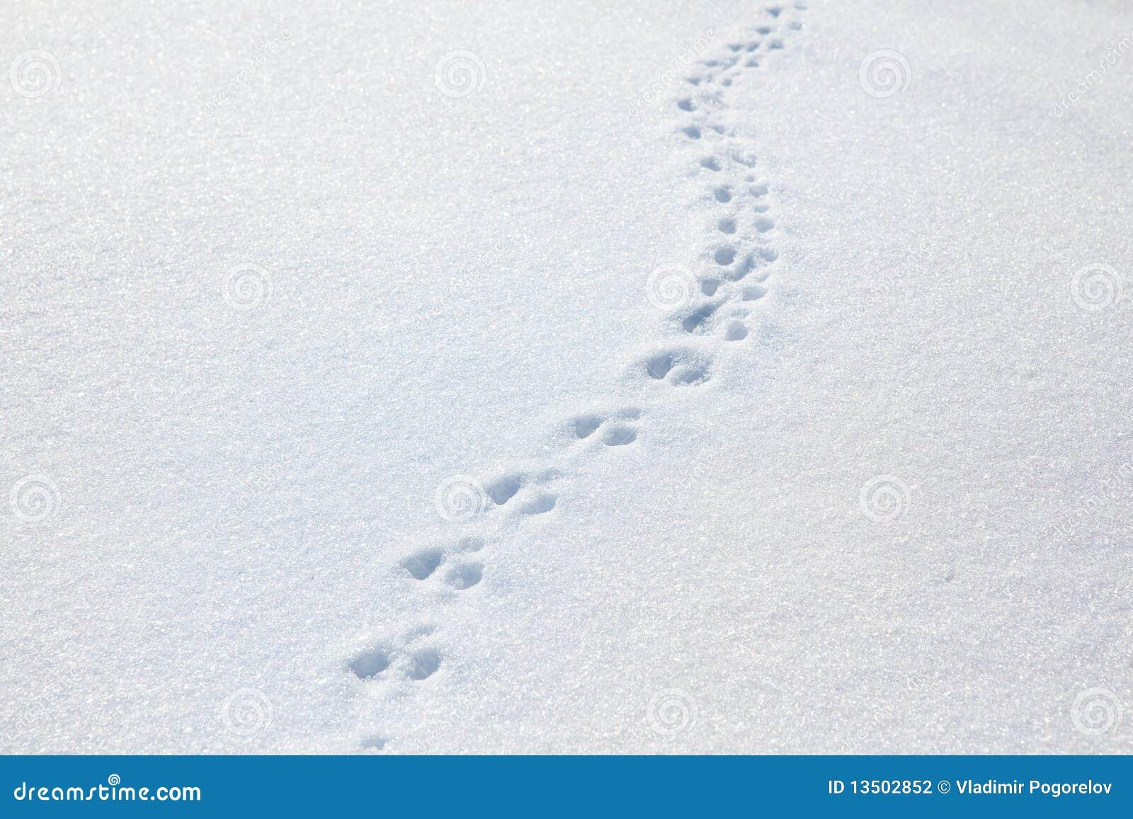 spuren einer katze auf schnee stockfoto bild 13502852. Black Bedroom Furniture Sets. Home Design Ideas