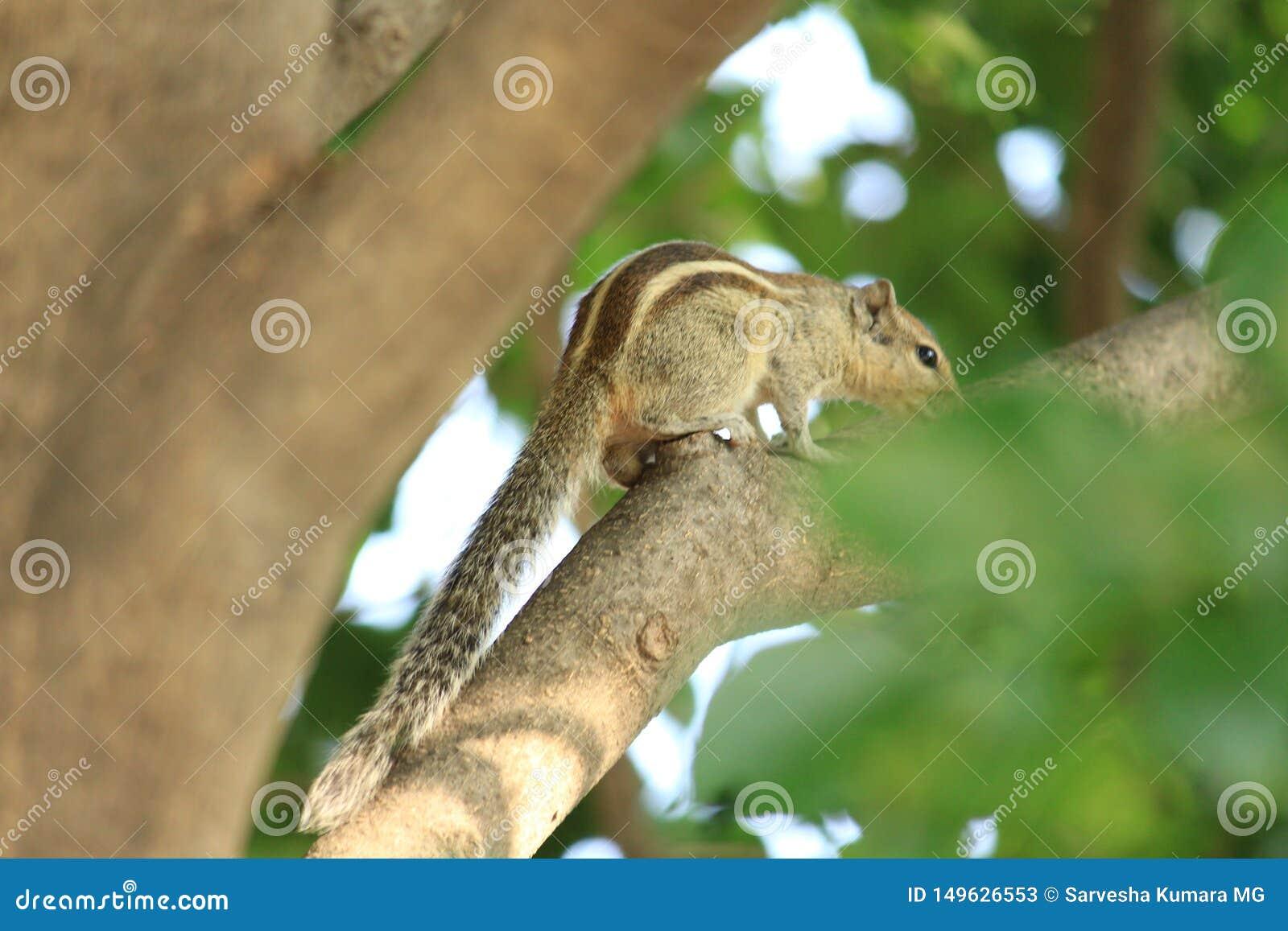 Sqirrel spaventoso su su un albero