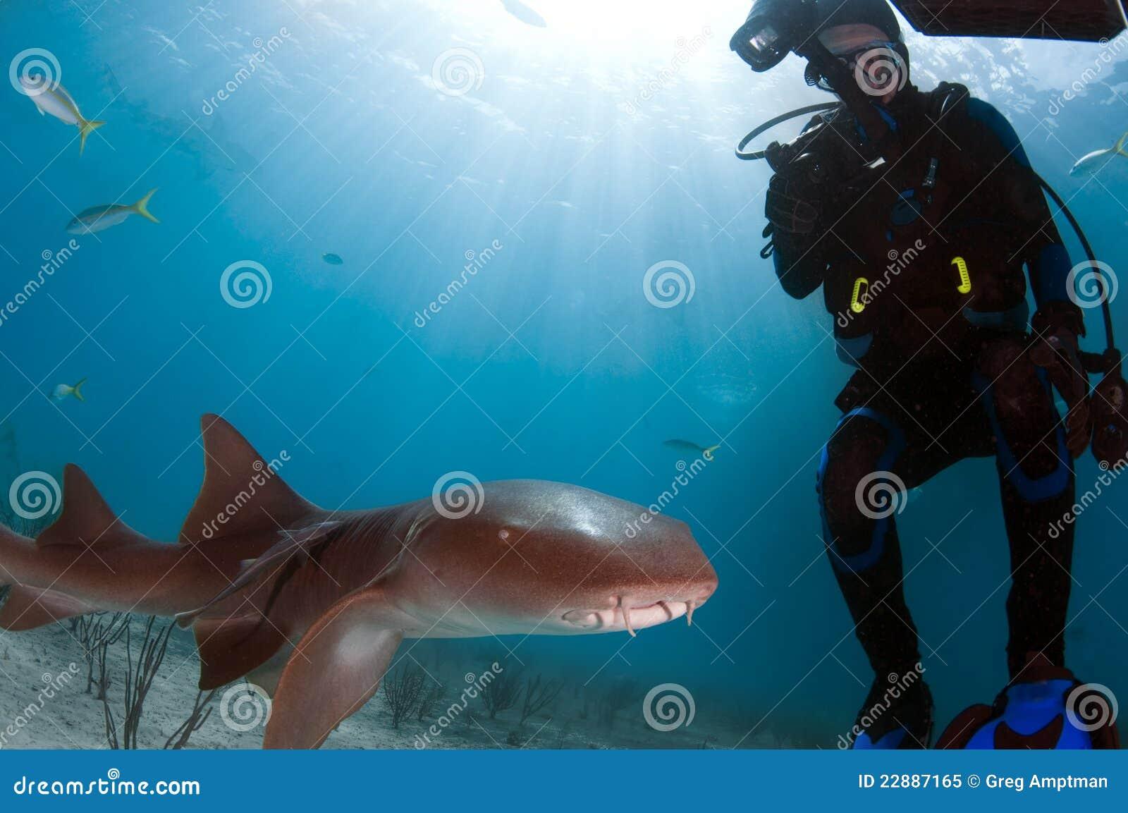 Squalo di infermiera con l operatore subacqueo