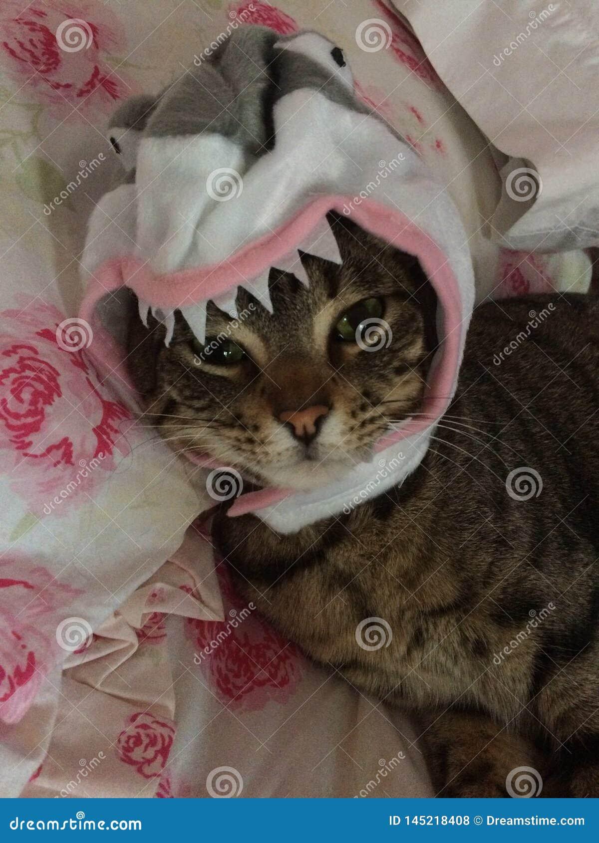 Squalo Kitty