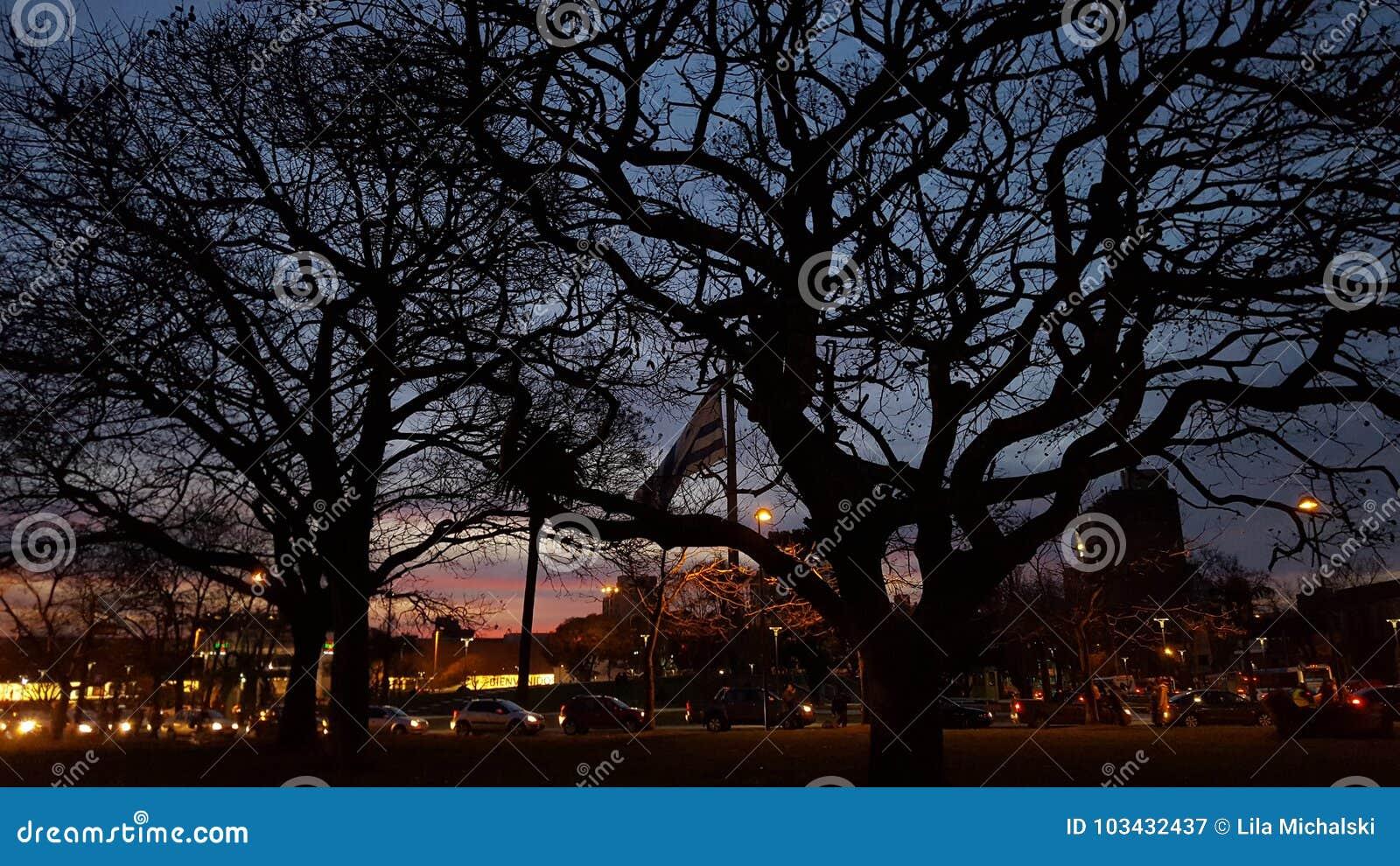 Square of flag editorial photography. Image of ocaso - 103432437 15957e5f678