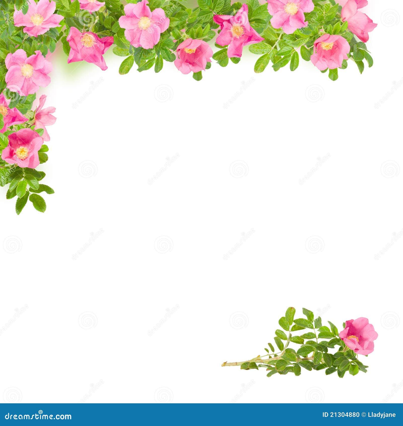 نقاشی حاشیه گل Square Floral Frame With Pink Briar Stock Photo - Image ...